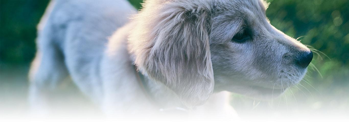 Kisirlastirma Konusunda Bilmeniz Gereken Her Sey Hill S Pet