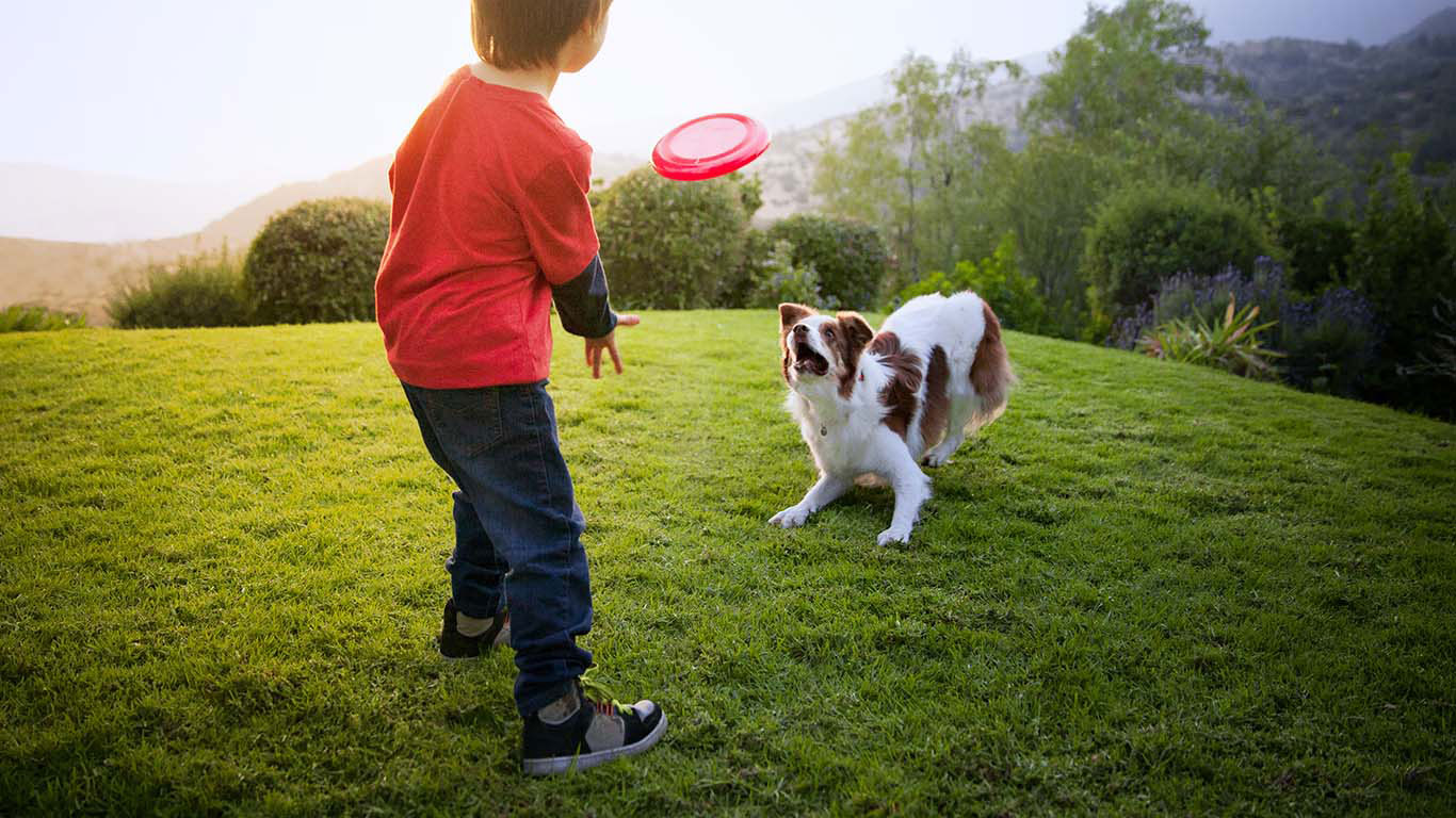 Hill S Pet Nutrition Kopek Mamasi Hayatlari Donusturen Kedi Mamasi